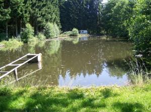 étang très calme et poissonneux
